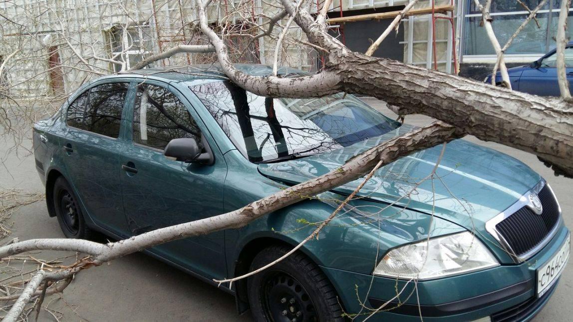 Что делать, если на машину упало дерево, куда обращаться, звонить?