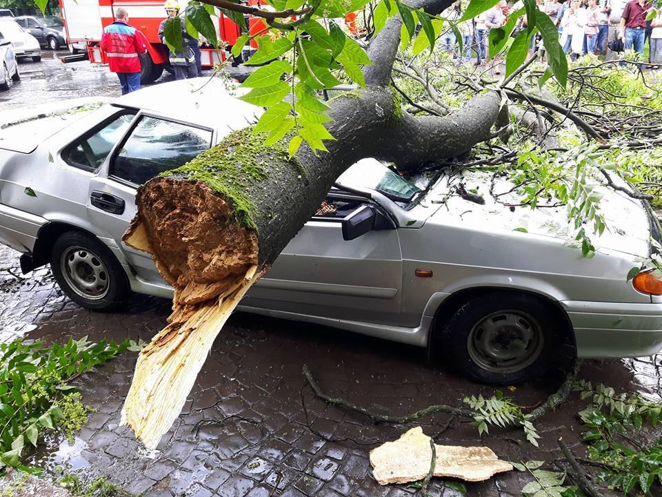 Водитель врезался в дерево – это дтп? и кто виноват?