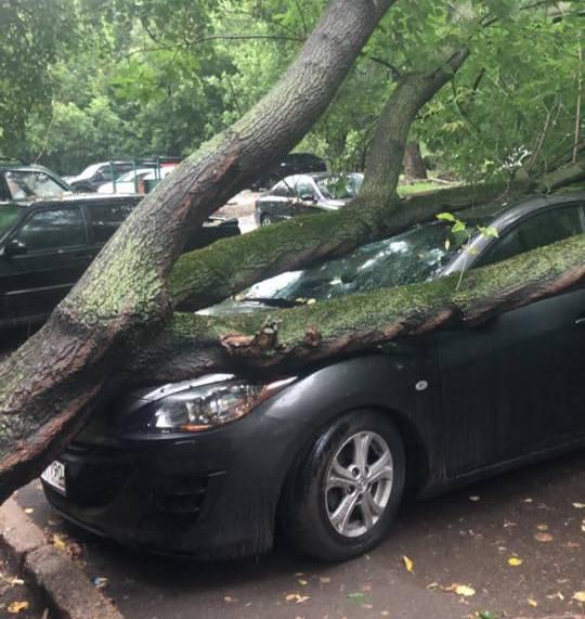 На машину упало дерево что делать, практический опыт   autozona54