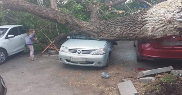 На машину упало дерево, забор или снег с крыши – это дтп и что делать?