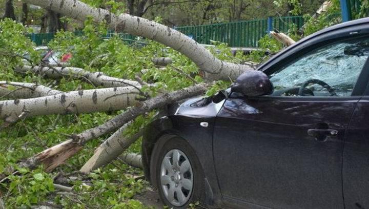 Дерево упало на машину: куда обращаться, кто возместит ущерб