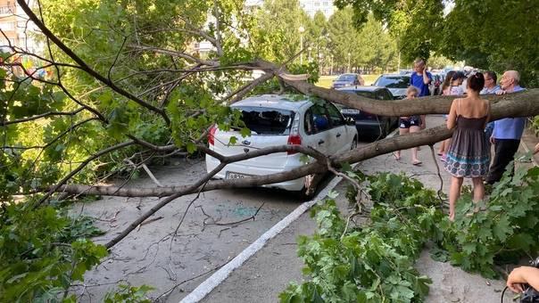 На машину упало дерево – что делать?