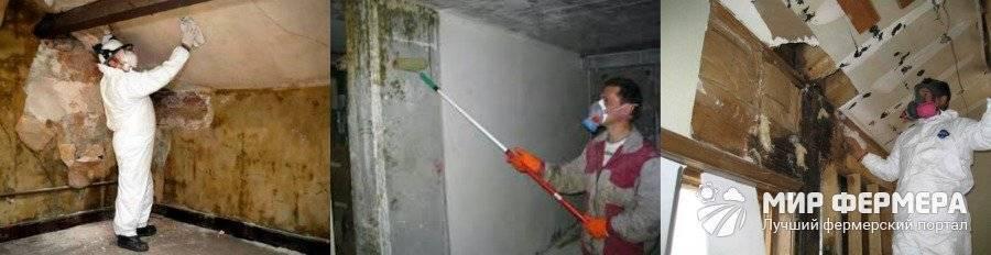 Сырость в подвале гаража. способы просушки