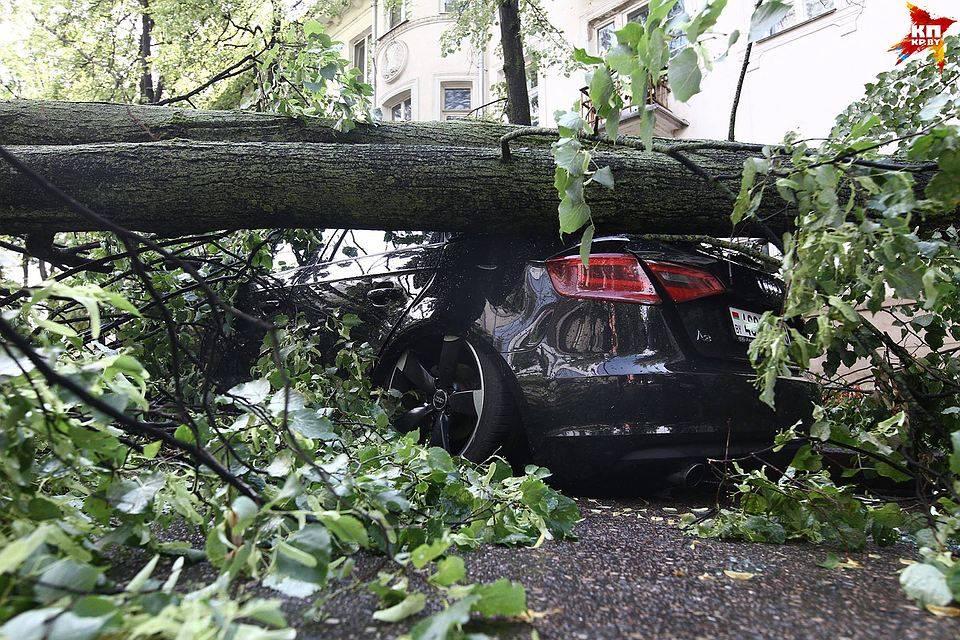 Дтп: на авто упал снег, забор или дерево – что делать?