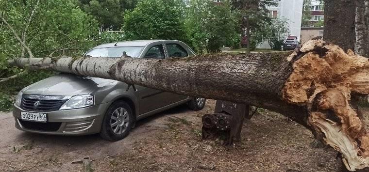Дерево упало на гараж: что делать — инструкция