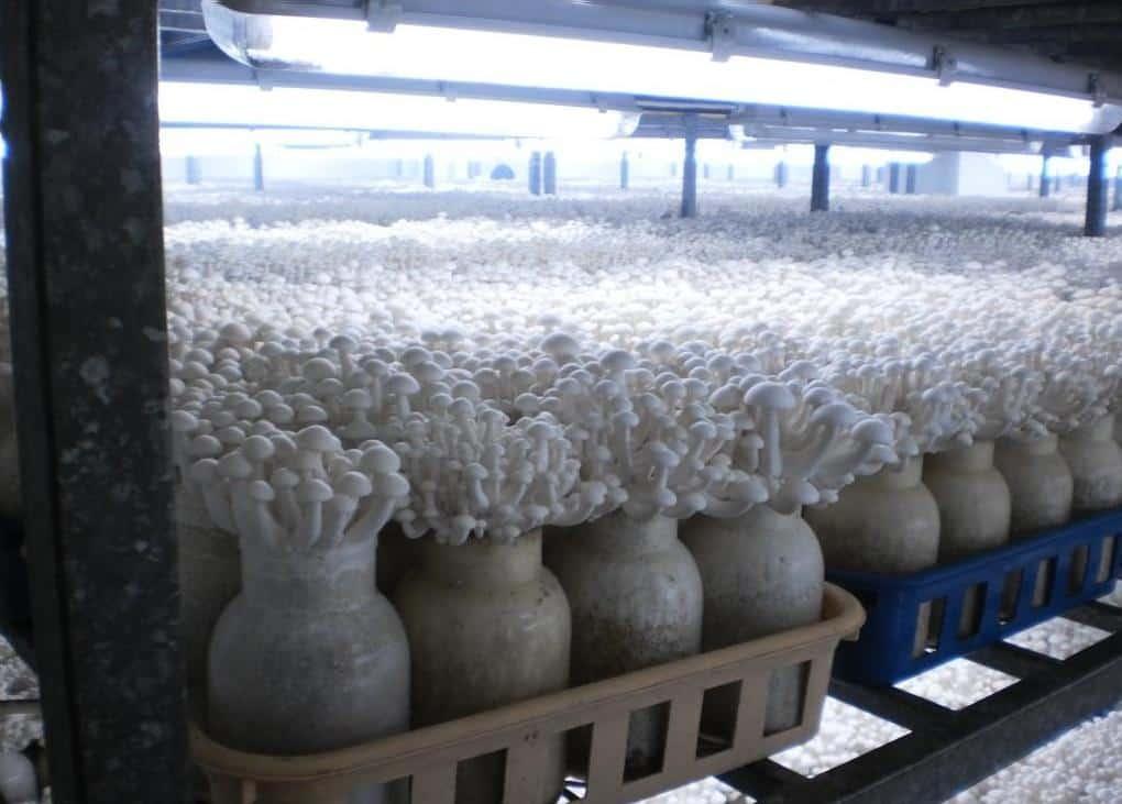Выращивание грибов как бизнес в 2021 году