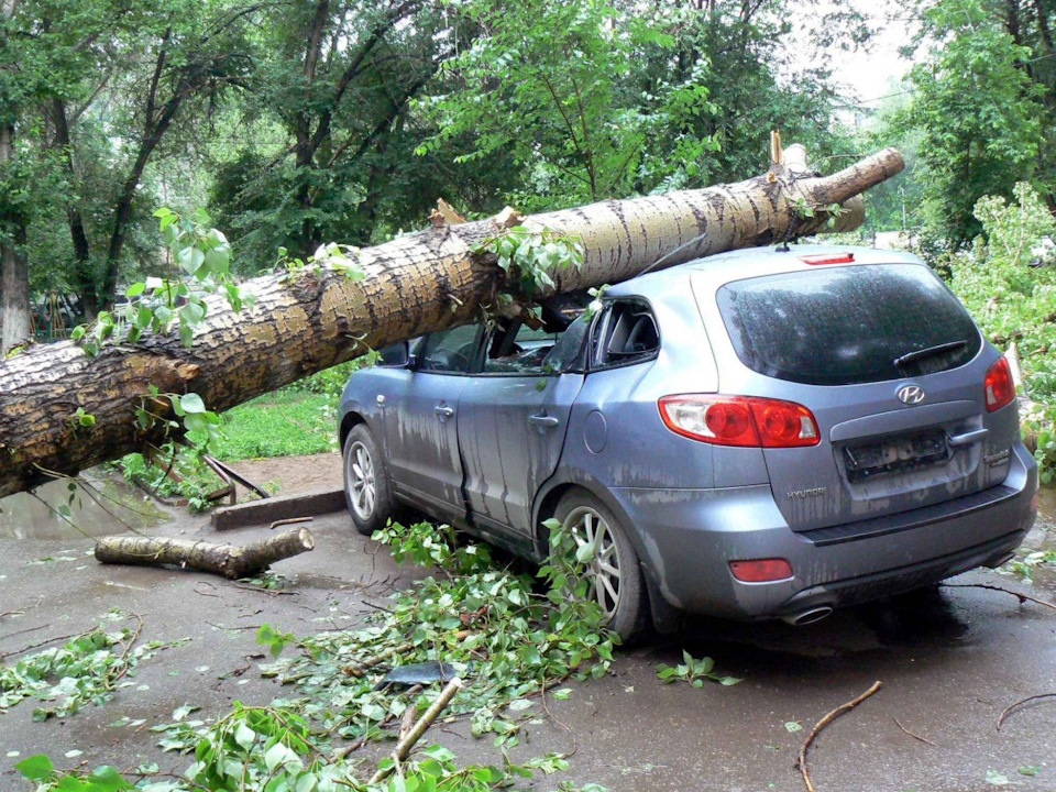 Упало дерево: что делать и куда звонить