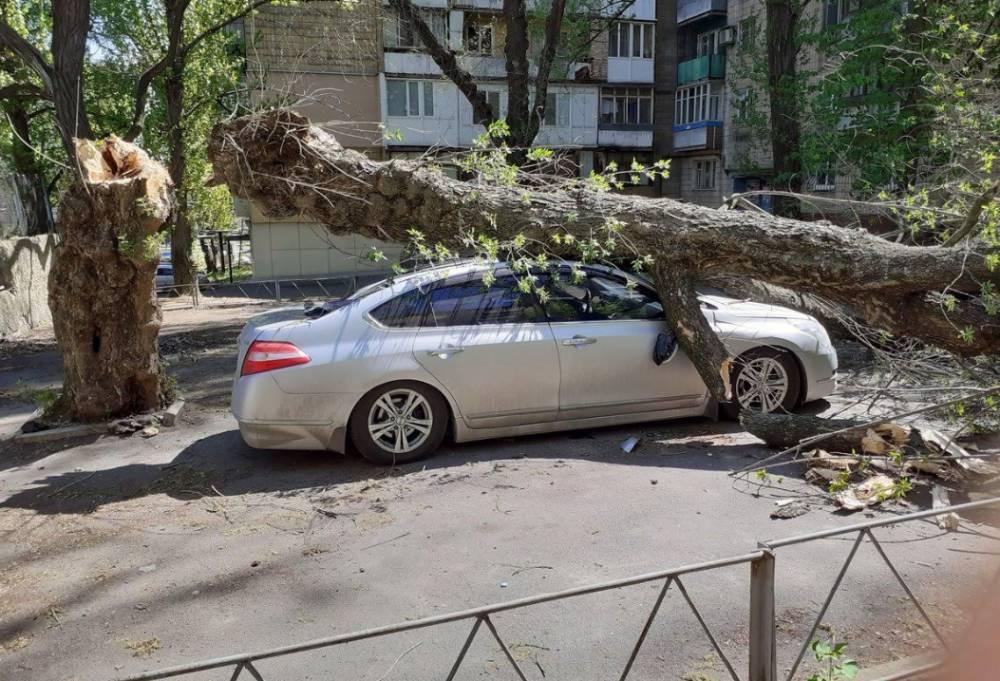 Упало дерево на машину - что делать? ответ