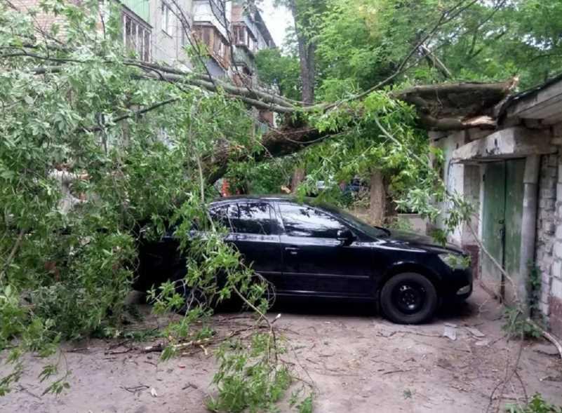 Упало дерево на машину. что делать
