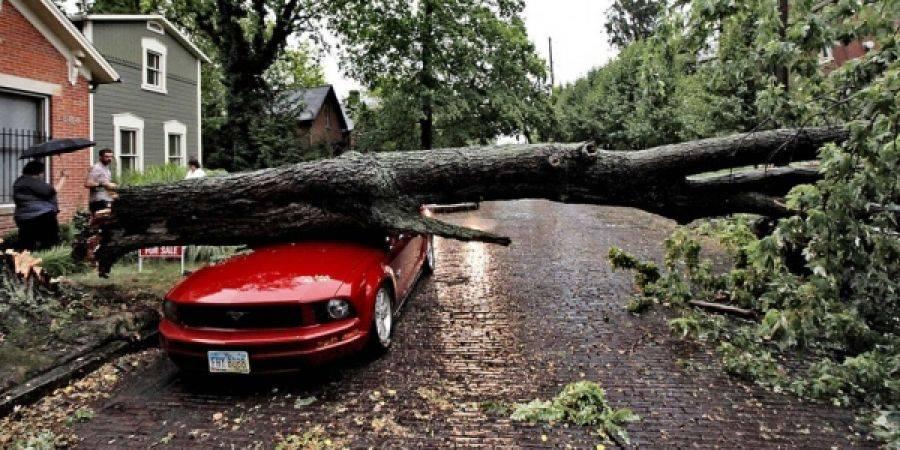 Куда звонить, если дерево повредило машину
