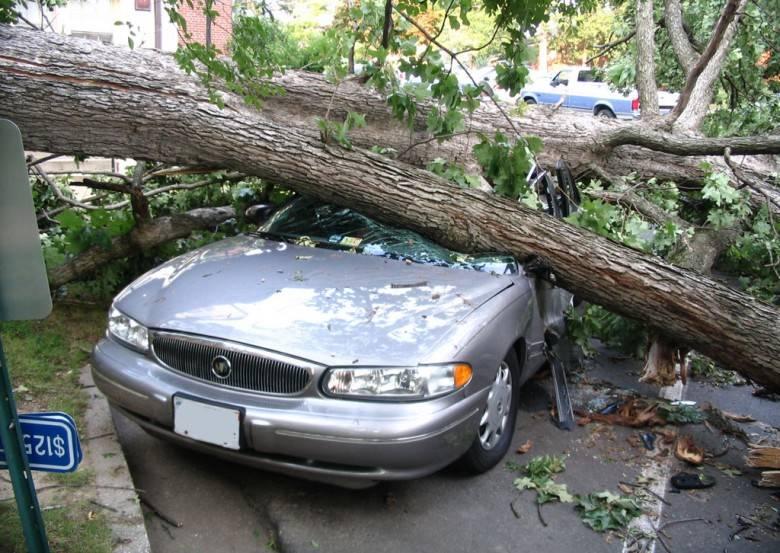 Порядок действий в случае, если дерево упало на машину