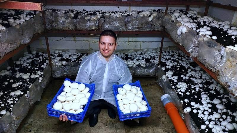 Как выращивать грибы в домашних условиях: 14 шагов