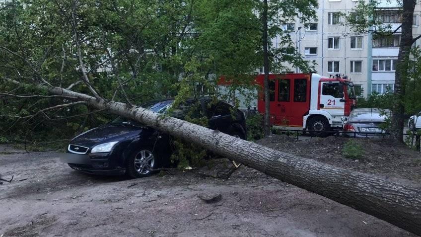 Что делать, если на машину упало дерево при сильном ветре (осаго)