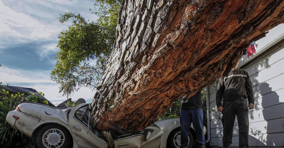 Что делать, если на машину упало дерево? каско, осаго или суд?