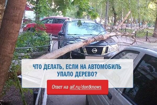 Упало дерево на машину. что делать — лада мастер