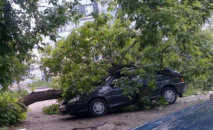 Падение дерева на автомобиль: подробная инструкция