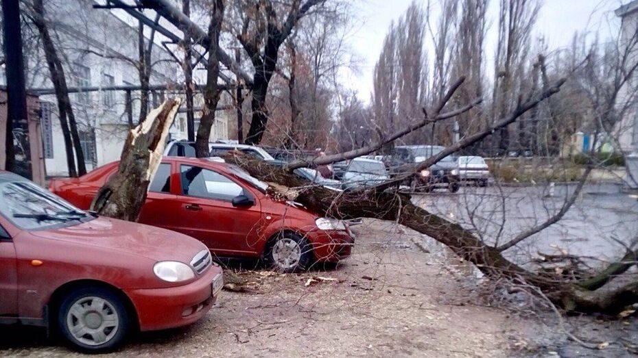 Что делать если на автомобиль упало дерево?