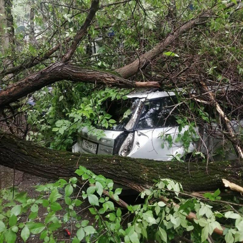 Автомобиль въехал в дерево или оно упало на машину – что делать, кто виноват и считается ли это дтп?