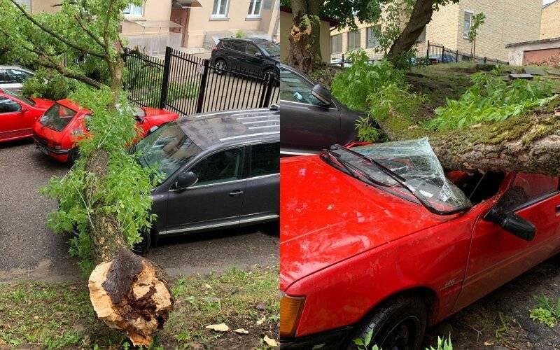 Упало дерево на машину: кто виноват, куда обращаться, помощь юриста