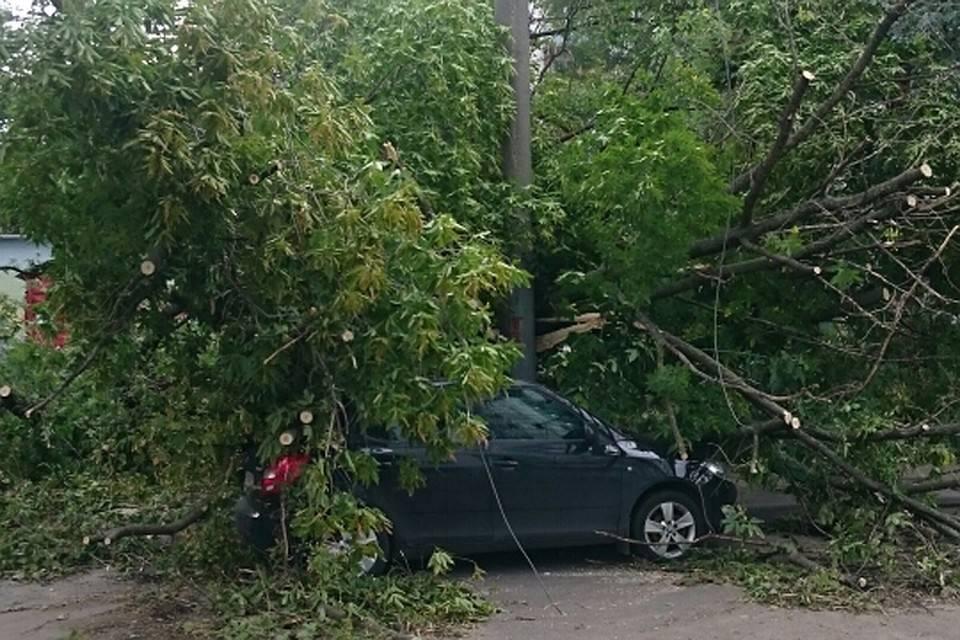 Дерево упало на машину: что делать, судебная практика