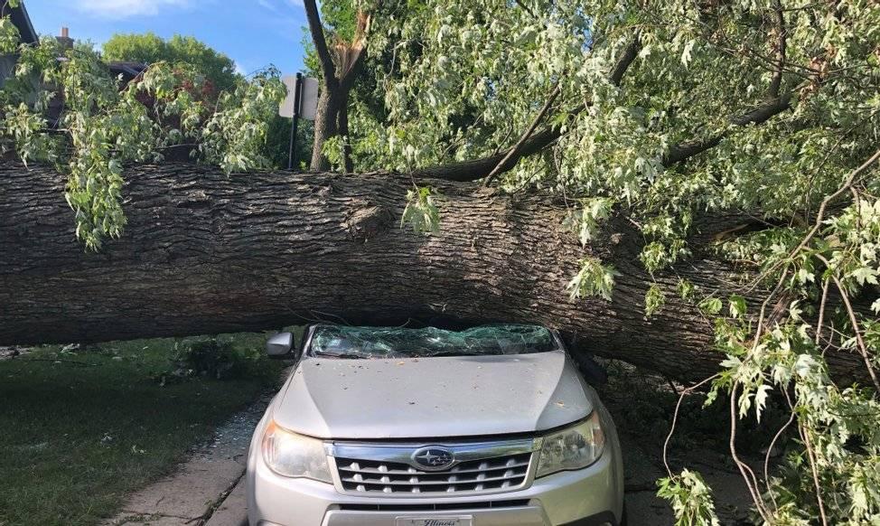Что делать, если на машину упало дерево, куда обращаться?