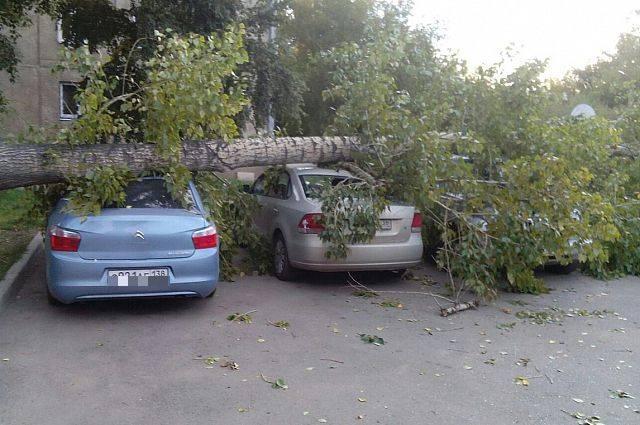 Что делать, если на машину упало дерево? куда обращаться?