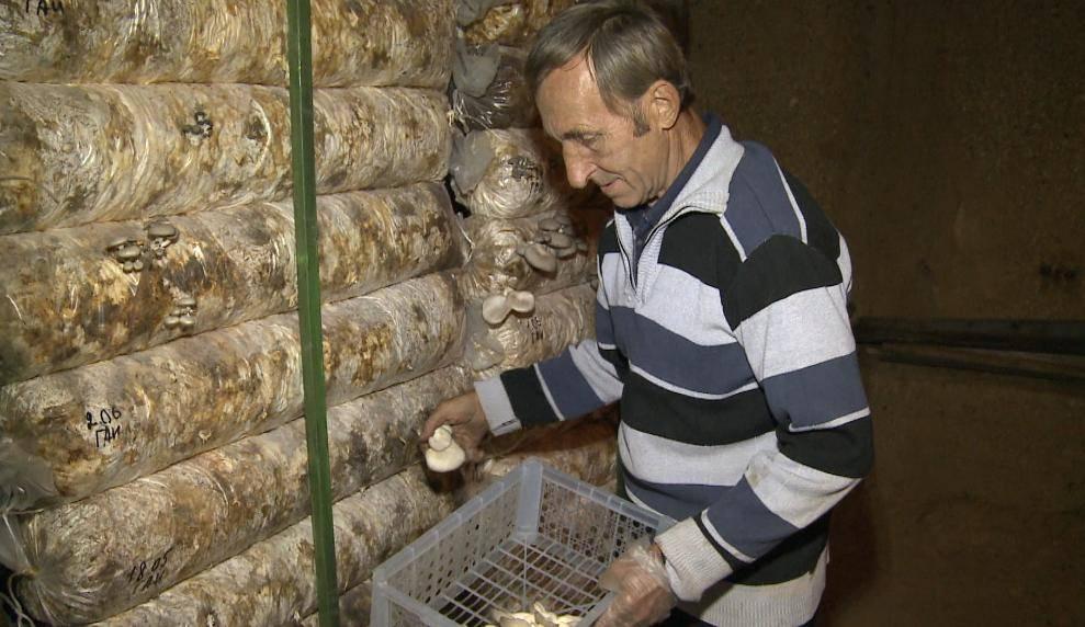 Выращивание грибов на даче и в огороде: способы для новичков