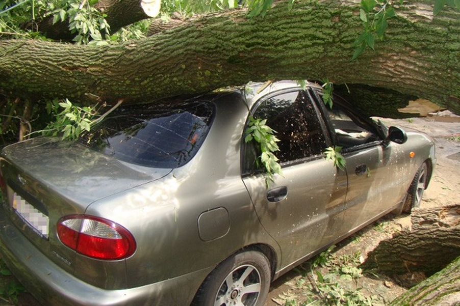 Порядок действий если на машину упало дерево